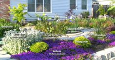 drought tolerant landscape, california | Some native plants are drought tolerant as well as low maintenance ...