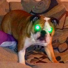 Scary eyes.