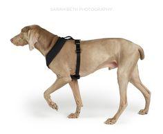 minneapolis commercial pet photography :: dog coats