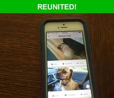 Great news! Happy to report that Molly has been reunited and is now home safe and sound! :)