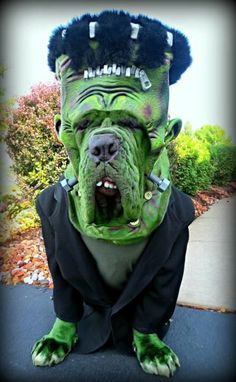 Grab your torches and pitchforks... Frankenpooch is on the loose