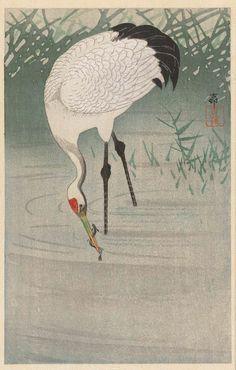 Japanese Artwork, Japanese Prints, Chinese Painting, Chinese Art, Bird Illustration, Illustrations, Japanese Bird, Ohara Koson, Japan Painting