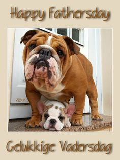 Afrikaans, French Bulldog, Father, Dogs, Animals, Pai, Animales, Animaux, French Bulldog Shedding