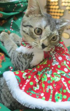 *ADOPTED* We hope your heart melts like ours did. Vespa is all ready for Santa to make her wishes come true!   AHS-Forked River  If you haven't read her story yet check it out here: http://www.ahscares.org/showarchive.asp?id=5035