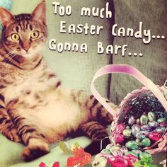 For a cat that never leaves the house Brenna sure does know the neighbors around Herndon! She just received a funny card from the little ol' lady down the street! #neighbors  #herndon #smalltownusa #easter #kittyslut #funny #misspopular #spring #thursday #ladybrennaoffairfax #cat #cats #carsofinstagram #catsagram #catsofworld #kitty #katzenworldblog #cats_of_instagram #catlover #bengal #bengalcat #bengalsofinstagram #bengal_cats #faithhopeloveandlucksurvivedespiteawhiskeredaccomplice…