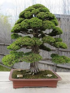 Image result for bonsai group planting