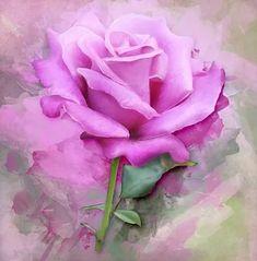 Imagem gratis no Pixabay - Rose, Pintura, Arte, Floral, Flor Beautiful Pink Roses, Purple Roses, Watercolor Shower Curtain, Watercolor Flower, Watercolor Print, Floral Printables, Colorful Roses, Perfect Pink, 5d Diamond Painting