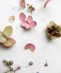 1,008 vind-ik-leuks, 7 reacties - Tinge by Ashley Beyer (@tingefloral) op Instagram: 'Creating some color stories in prep for a shoot with @flowermagazine this week.'