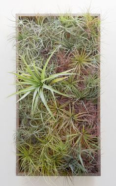 Vertical garden created by Flora Grubb Gardens made entirely of tillandsias
