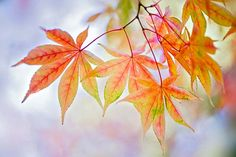 Autumn Palette by Jacky Parker    From £16 as poster print. Also available on canvas or acrylic.