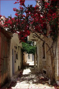 This is what I remember the backstreets of a Greek sea-faring island I went to when I was seventeen.  It was so quaint there.  I remember there were little shops with sponges hanging up the walls.  It was magical.  Also, the streets below the acropolis were just like this too.  So whimsical.