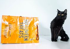 Bonnie is a spayed female #black #cat available for adoption at Grandview Petland