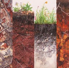 Ilustraciones perfiles de suelo