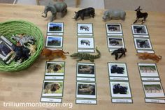 Animals from Africa at Trillium Montessori (includes link to free animals printable)