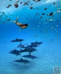 nadar con delfines en el mar, no en una piscina