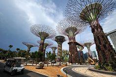 Hi-Tech Garden - Singapore