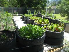 Vegetable garden design ideas landscaping network, Get tips and ideas for designing the perfect vegetable garden learn about raised beds kitchen gardens square foot gardening and more. Description from nedgrind.com. I searched for this on bing.com/images