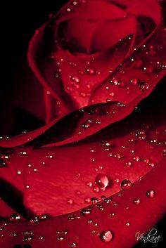 ☆ Red Inspiration :¦: Photographer Nevena Uzurov ☆