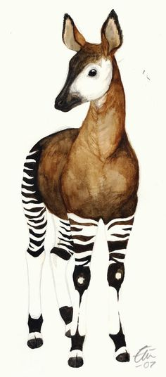 Id love a tattoo of this okapi on my outer thigh Nature Animals, Animals And Pets, Cute Animals, Bizarre Animals, Animal Drawings, Cute Drawings, Okapi, Most Beautiful Animals, Wild Creatures