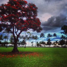 Our version of #Fall #foliage in #Hawaii. #HawaiiBigIsland #Hilo #gohawaii #MyHometownPins