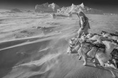 Paw patrol: the majestic sled dogs of the Arctic – in pictures   Art and design   The Guardian Wild Animals Photography, White Photography, Greenland Dog, Who Goes There, Learn To Swim, Paw Patrol, The Guardian, Natural World, Dog Pictures
