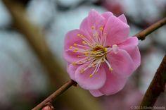 Explore eliseteshiraishi's photos on Flickr. eliseteshiraishi has uploaded 1148 photos to Flickr.