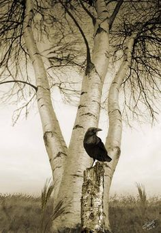 Crows Ravens:  #Raven ~ I M Spadecaller.