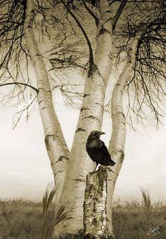 Crows Ravens:  #Raven ~ I M Spadecaller.