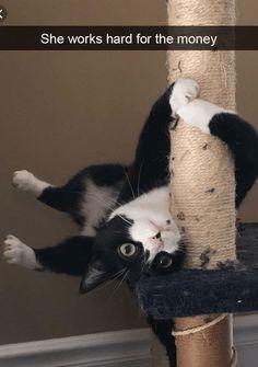 Funny Cat Photos, Funny Cat Videos, Funny Animal Pictures, Hilarious Pictures, Funny Animal Memes, Cute Funny Animals, Funny Memes, Meme Meme, Funniest Memes