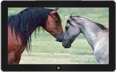 Mare and herd stallion