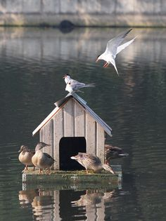 Duck houses on ponds heres a pic of the duck house floating on floating duck house solutioingenieria Choice Image