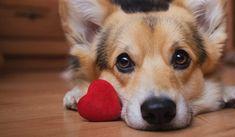 Happy Valentines Day! www.EmishaWellness.com Love Your Pet, Dog Love, Your Dog, Dogs Names List, Pet Names, Sphynx, Popular Girl Dog Names, Unique Female Dog Names, Tough Dog Names