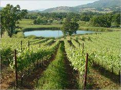 Golden Vineyards, Hopland, CA