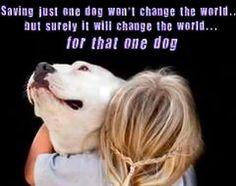 Houzz.com...Dogs...Love this...