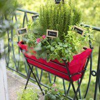 ハーブや野菜、お花を仲良く育てよう♪フランス式家庭菜園「ポタジェガーデン」の作り方