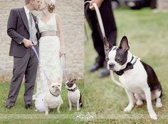 Prim and Proper French Bull Dogs...Photos:Simply Bloom via La Belle Bride