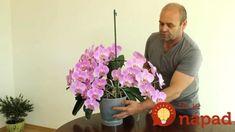 Majú aj 40 kvetov a kvitnú nonstop pol roka: Pestovateľ s najkrajšími orchideami prezradil, ako získať takúto nádheru! Bromeliads, Plants, Garden, Orchids, Flowers