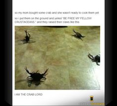 I am the crab lord.