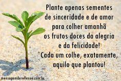 Plantando e Colhendo!