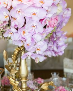 Lavender Phaleonopsi