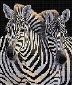 Zebras Free Download. Click to go to site and download link is underneath.