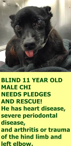 A4886663 I don't have a name yet and I'm an approximately 11 year old male chihuahua sh. I am not yet neutered. I have been at the Downey Animal Care Center since October 11, 2015. I will be available on October 15, 2015. You can visit me at my temporary home at D708. https://www.facebook.com/photo.php?fbid=956788924401440&set=pb.100002110236304.-2207520000.1445120210.&type=3&theater