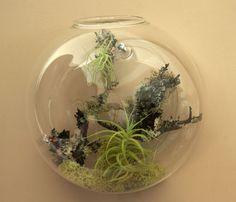 Air plants in hanging wall terrarium