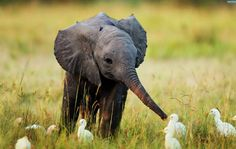 """--by Laurel Neme in A Voice for Elephants-- Orphaned elephants """"can be fine one"""