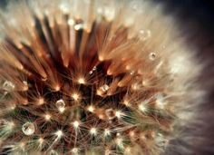 best photos 2 share: texture Gallery: Nature, Flowers, and Plants