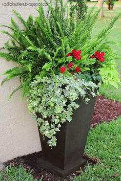 Large container with sun fern, geraniums, sweet potato vine and ivy Geranien # Container Flowers, Flower Planters, Garden Planters, Fern Planters, Planter Pots, Geranium Planters, Full Sun Container Plants, Ferns Garden, Large Flower Pots