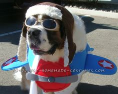 Saint Bernard Dog Costume: Captain America to the Rescue!… Coolest Halloween Costume Contest