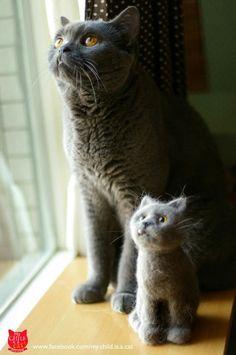 kitty and its kitty felt!!