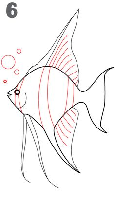 How to Draw a Fish | ... quick video on how to draw an Angel Fish if you prefer to watch Videos