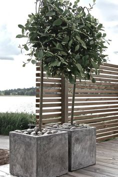 This could work to hide an eyesore. The slatted privacy screen posts could insert into or attach to big heavy planters on either side. No need to insert posts into the ground. Outdoor Spaces, Outdoor Living, Restaurant Exterior, Balcony Plants, Design Apartment, Concrete Planters, Outdoor Planters, Garden Planning, Garden Projects